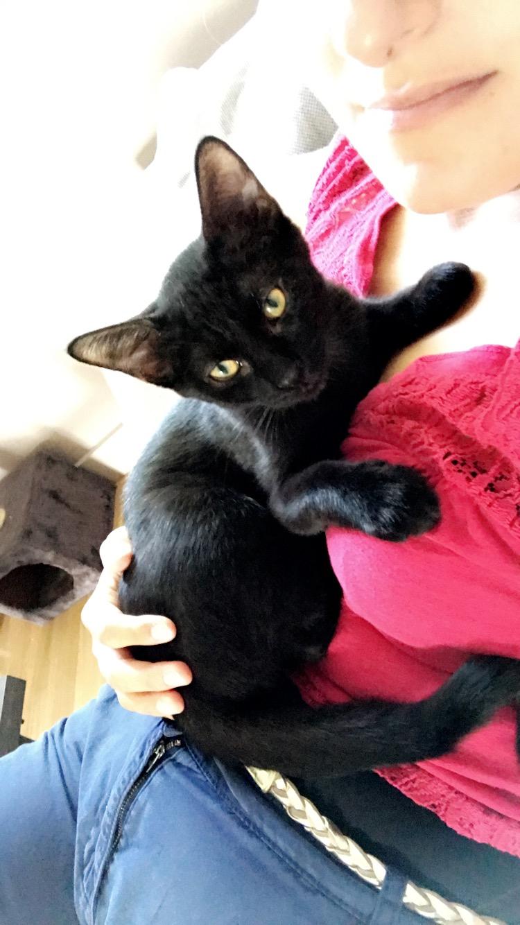 Oxana, chatonne noire, née le 03 mai 2018 39292210