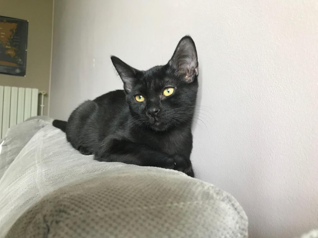 Oxana, chatonne noire, née le 03 mai 2018 39543510