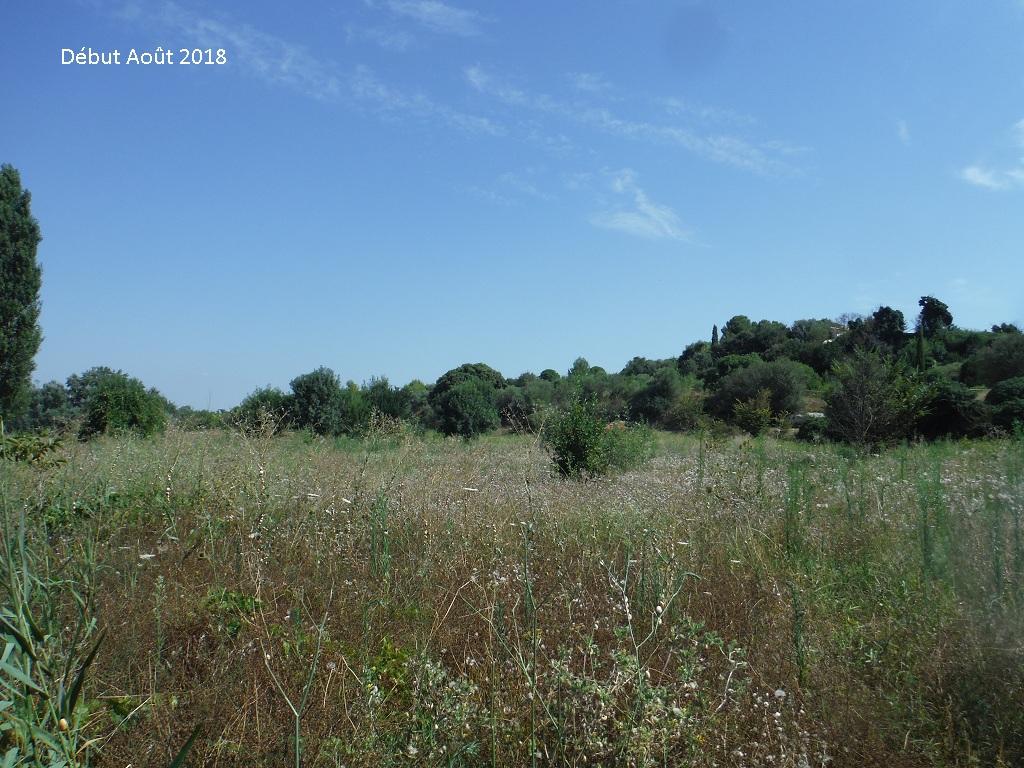 JdB de 4 hectares de pâtures dans le SUD : Avril 2019, et toujours la sécheresse... - Page 9 10026p10