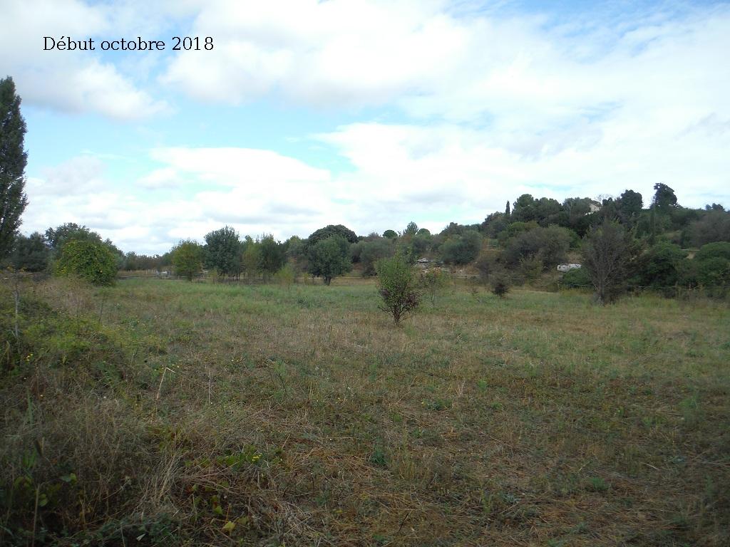 JdB de 4 hectares de pâtures dans le SUD : Avril 2019, et toujours la sécheresse... - Page 9 10027p10