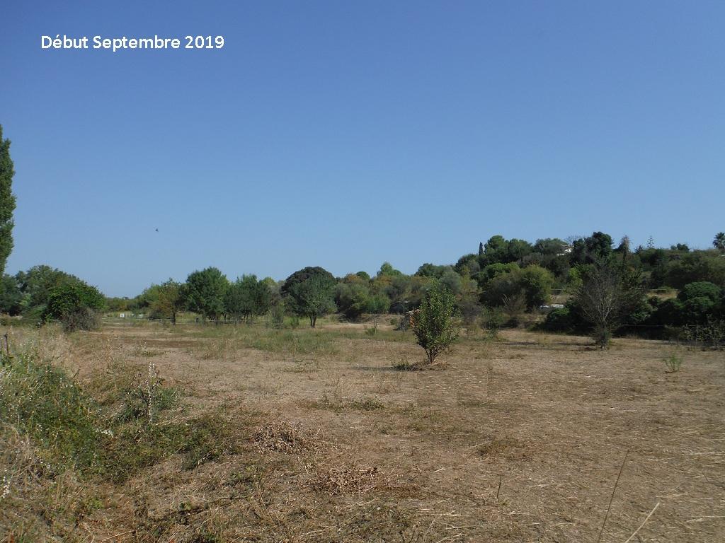 JdB de 4 hectares de pâtures dans le SUD : Timide reprise après 8 mois de sécheresse - Page 13 10038p10