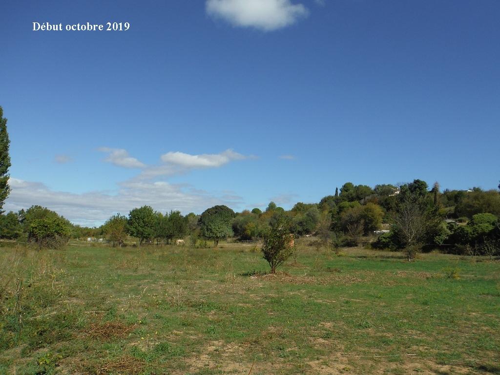 JdB de 4 hectares de pâtures dans le SUD : Timide reprise après 8 mois de sécheresse - Page 13 10039p10