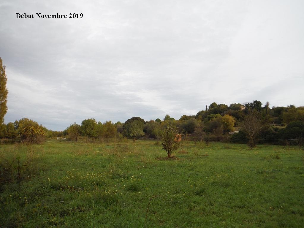 JdB de 4 hectares de pâtures dans le SUD : Janvier à la diète... + expérimentation - Page 13 10040p10
