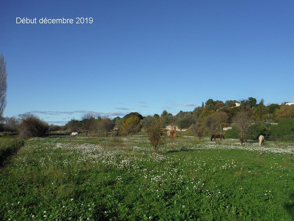 JdB de 4 hectares de pâtures dans le SUD : Janvier à la diète... + expérimentation - Page 13 10041p10