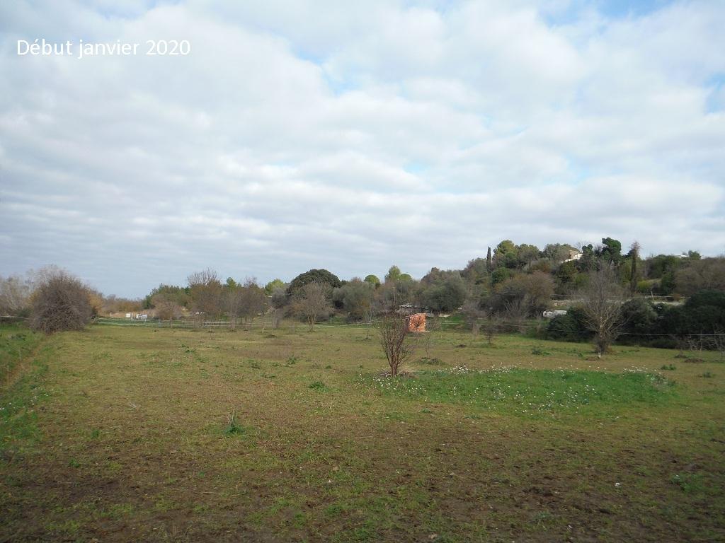 JdB de 4 hectares de pâtures dans le SUD : Janvier à la diète... + expérimentation - Page 13 10042p10
