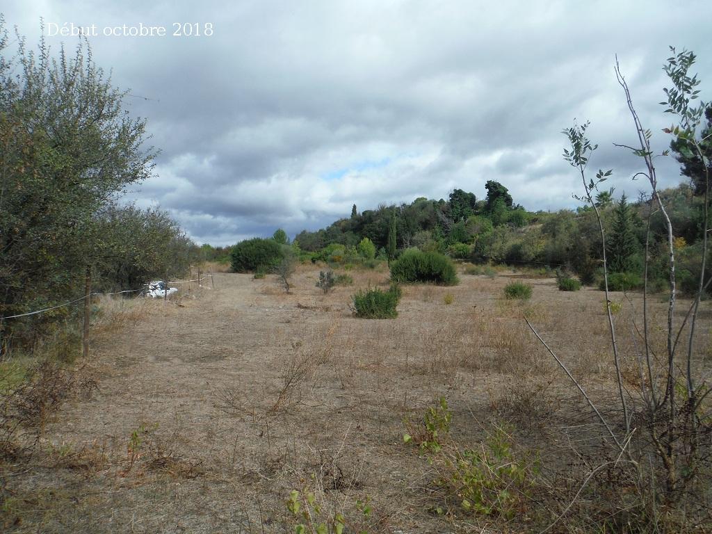 JdB de 4 hectares de pâtures dans le SUD : Avril 2019, et toujours la sécheresse... - Page 9 1027pa10