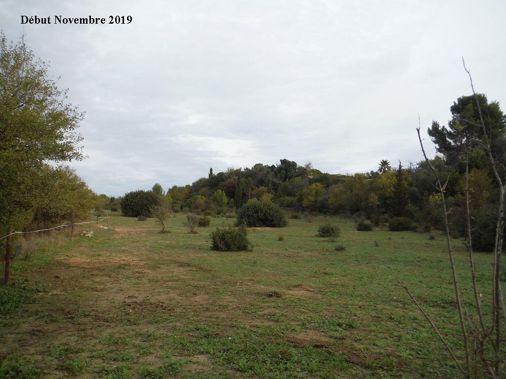 JdB de 4 hectares de pâtures dans le SUD : Janvier à la diète... + expérimentation - Page 13 1040pa10