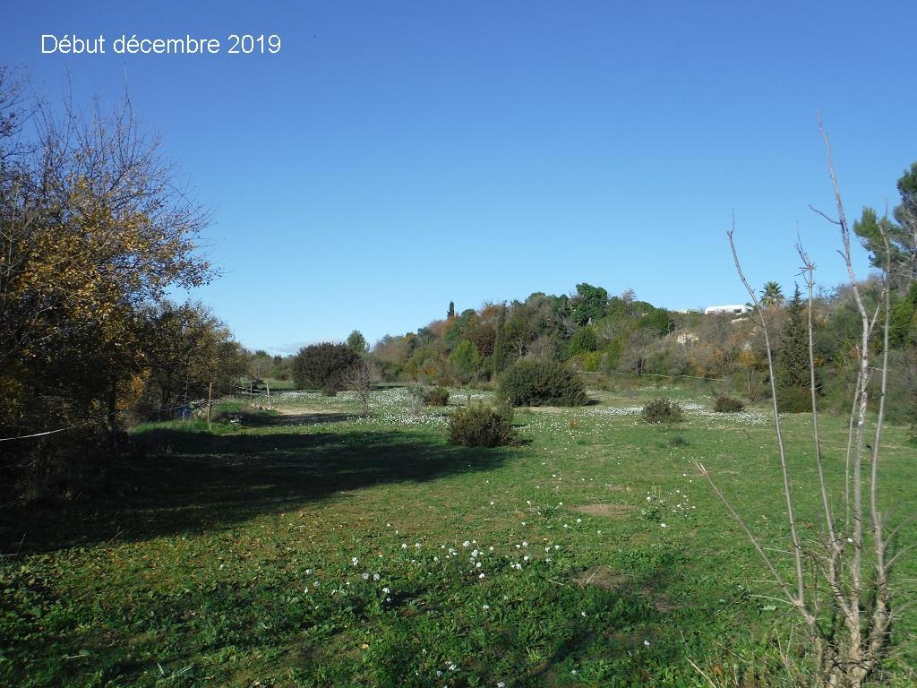 JdB de 4 hectares de pâtures dans le SUD : Janvier à la diète... + expérimentation - Page 13 1041pa10