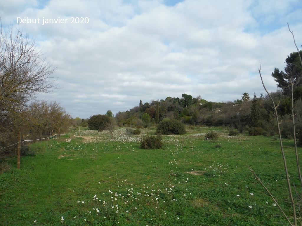 JdB de 4 hectares de pâtures dans le SUD : Janvier à la diète... + expérimentation - Page 13 1042pa10