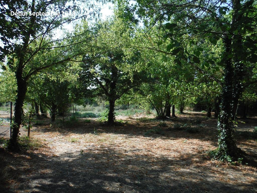 JdB de 4 hectares de pâtures dans le SUD : Timide reprise après 8 mois de sécheresse - Page 13 11038p10
