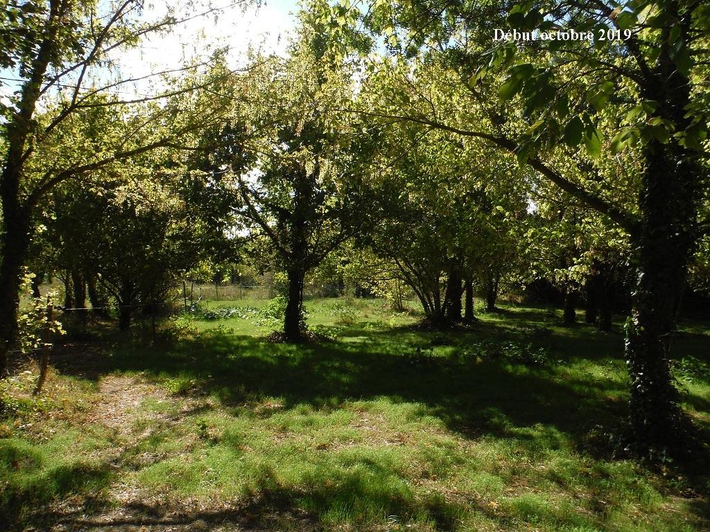 JdB de 4 hectares de pâtures dans le SUD : Timide reprise après 8 mois de sécheresse - Page 13 11039p10