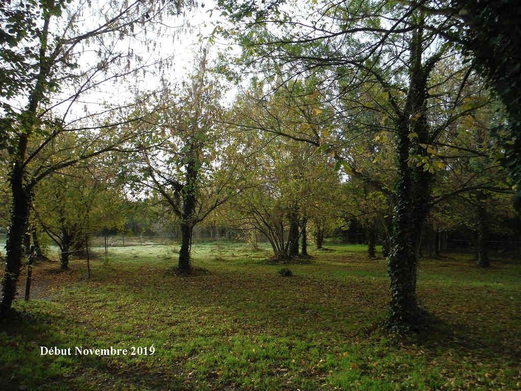 JdB de 4 hectares de pâtures dans le SUD : Janvier à la diète... + expérimentation - Page 13 11040p10