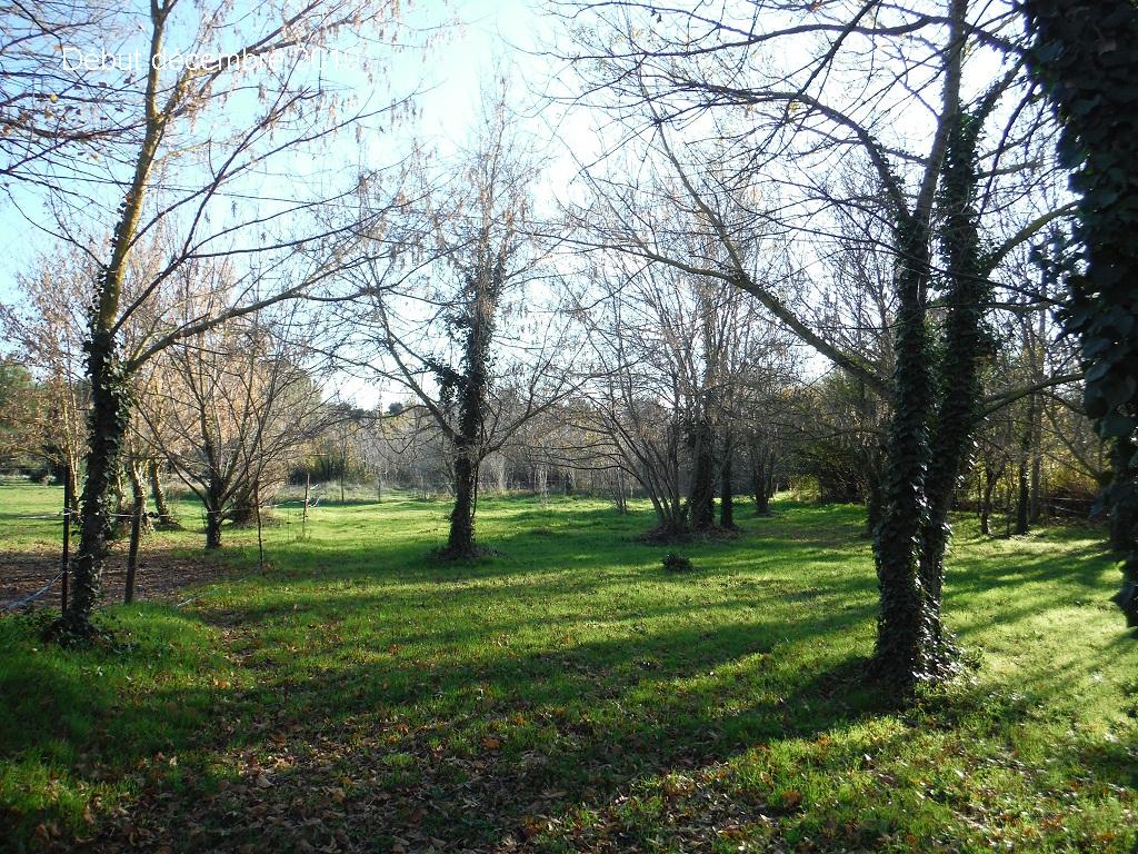 JdB de 4 hectares de pâtures dans le SUD : Janvier à la diète... + expérimentation - Page 13 11041p10