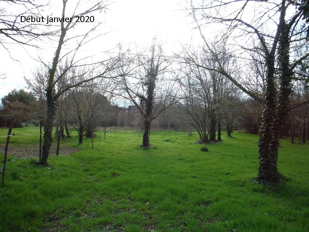 JdB de 4 hectares de pâtures dans le SUD : Janvier à la diète... + expérimentation - Page 13 11042p10