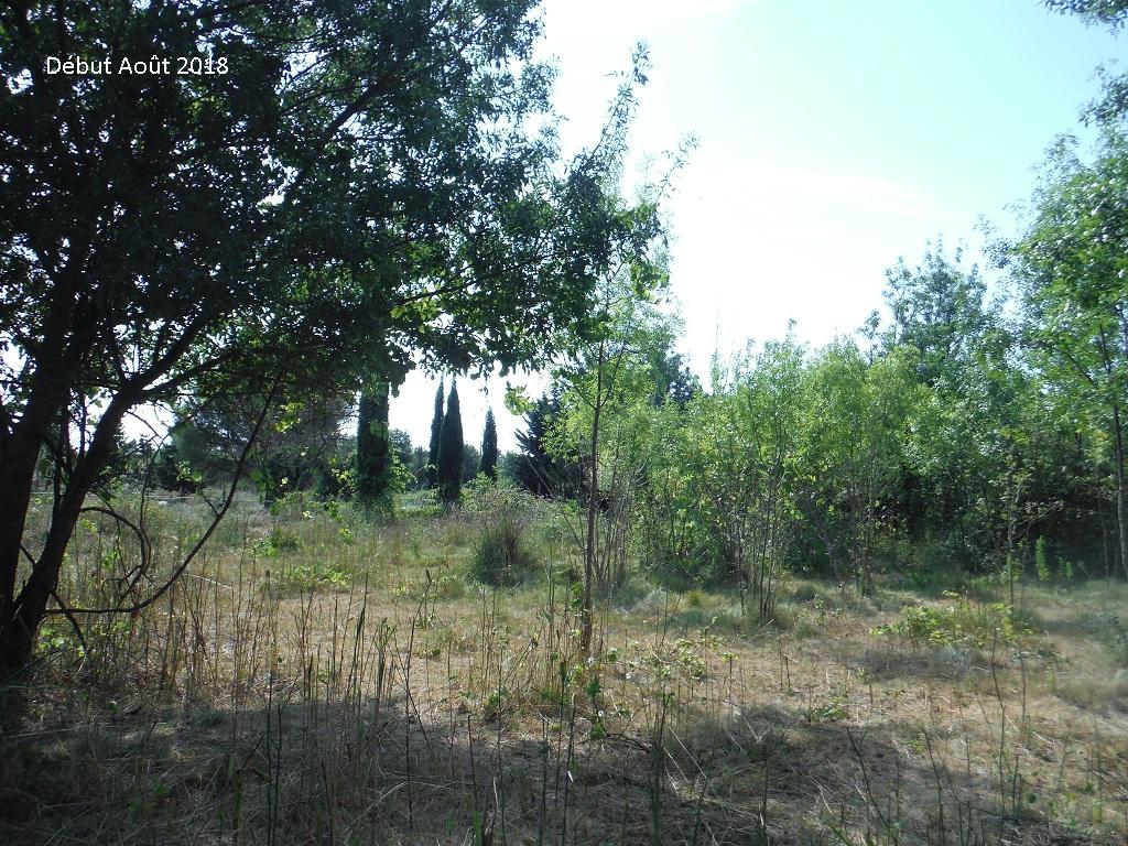 JdB de 4 hectares de pâtures dans le SUD : Avril 2019, et toujours la sécheresse... - Page 9 12026p10