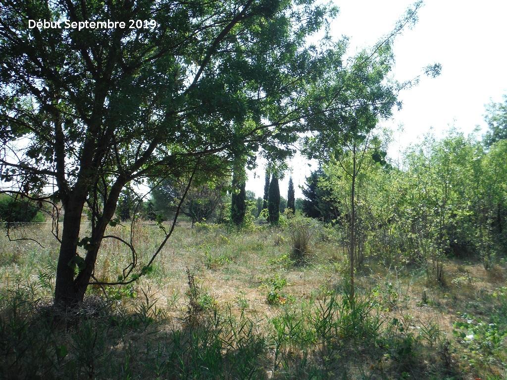 JdB de 4 hectares de pâtures dans le SUD : Timide reprise après 8 mois de sécheresse - Page 13 12038p10