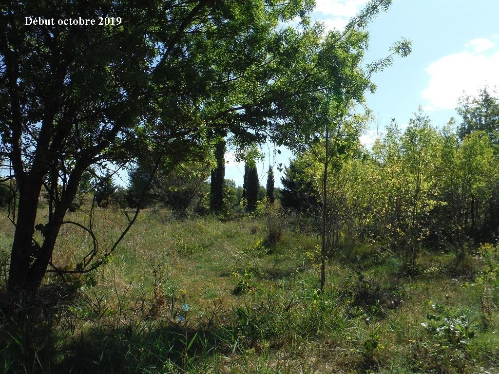 JdB de 4 hectares de pâtures dans le SUD : Timide reprise après 8 mois de sécheresse - Page 13 12039p10