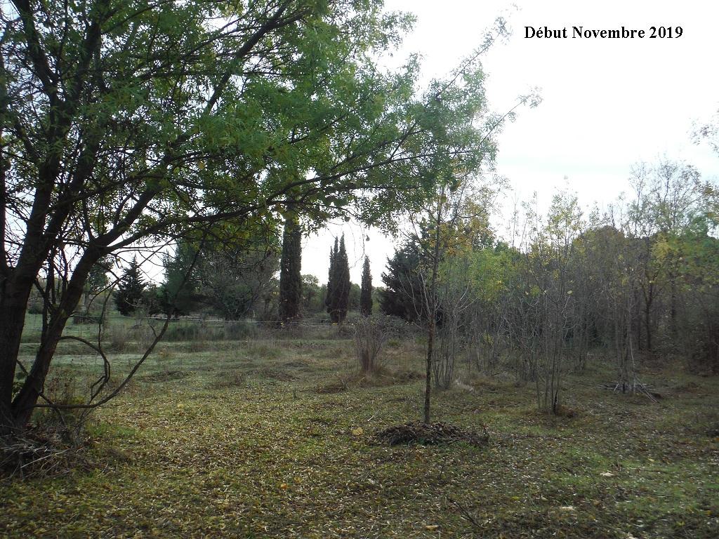 JdB de 4 hectares de pâtures dans le SUD : Janvier à la diète... + expérimentation - Page 13 12040p10