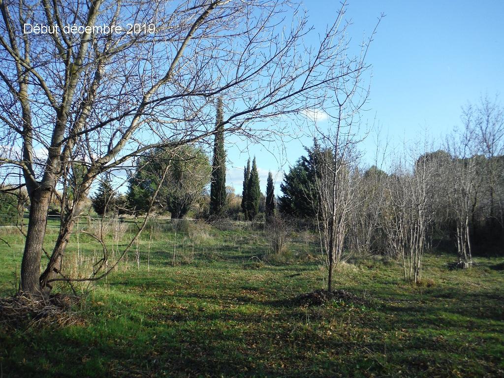 JdB de 4 hectares de pâtures dans le SUD : Janvier à la diète... + expérimentation - Page 13 12041p10