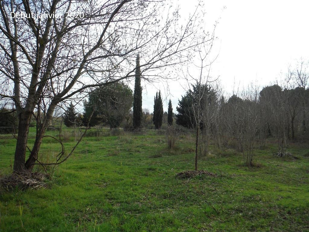 JdB de 4 hectares de pâtures dans le SUD : Janvier à la diète... + expérimentation - Page 13 12042p10