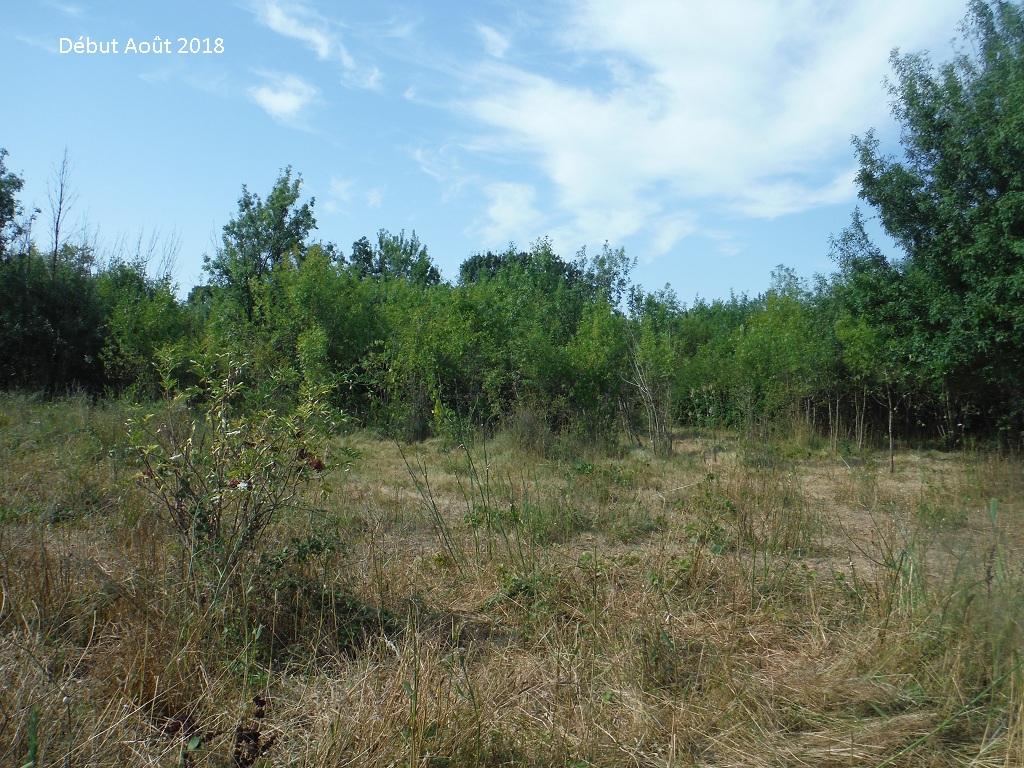 JdB de 4 hectares de pâtures dans le SUD : Avril 2019, et toujours la sécheresse... - Page 9 13026p10