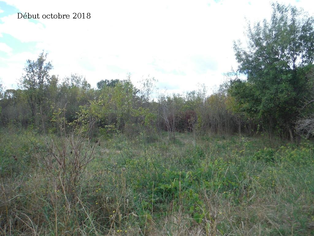JdB de 4 hectares de pâtures dans le SUD : Avril 2019, et toujours la sécheresse... - Page 9 13027p10