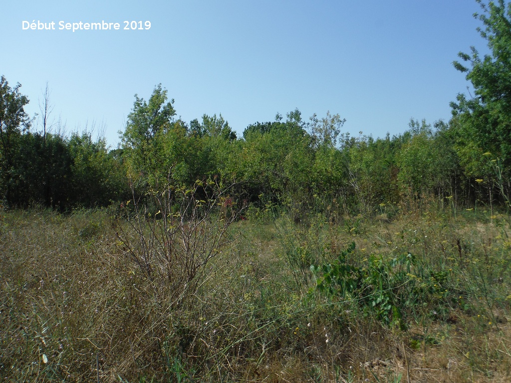 JdB de 4 hectares de pâtures dans le SUD : Timide reprise après 8 mois de sécheresse - Page 13 13038p10