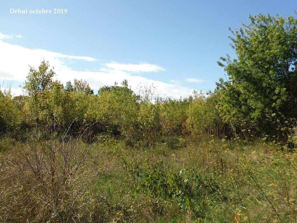 JdB de 4 hectares de pâtures dans le SUD : Timide reprise après 8 mois de sécheresse - Page 13 13039p10