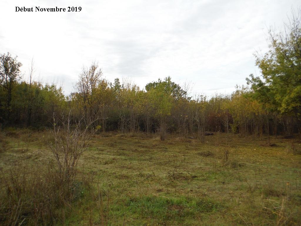 JdB de 4 hectares de pâtures dans le SUD : Janvier à la diète... + expérimentation - Page 13 13040p10