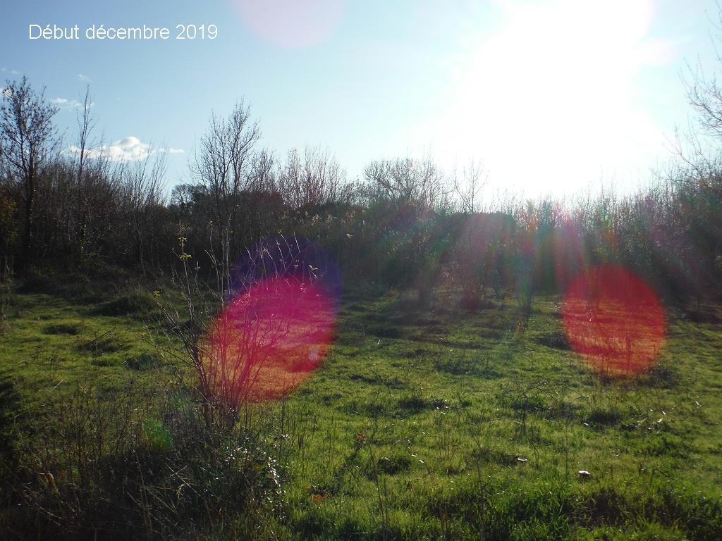 JdB de 4 hectares de pâtures dans le SUD : Janvier à la diète... + expérimentation - Page 13 13041p10