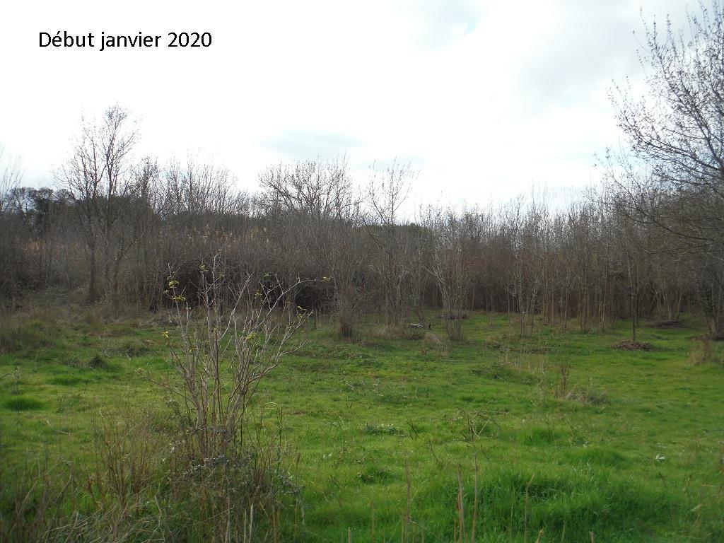 JdB de 4 hectares de pâtures dans le SUD : Janvier à la diète... + expérimentation - Page 13 13042p10