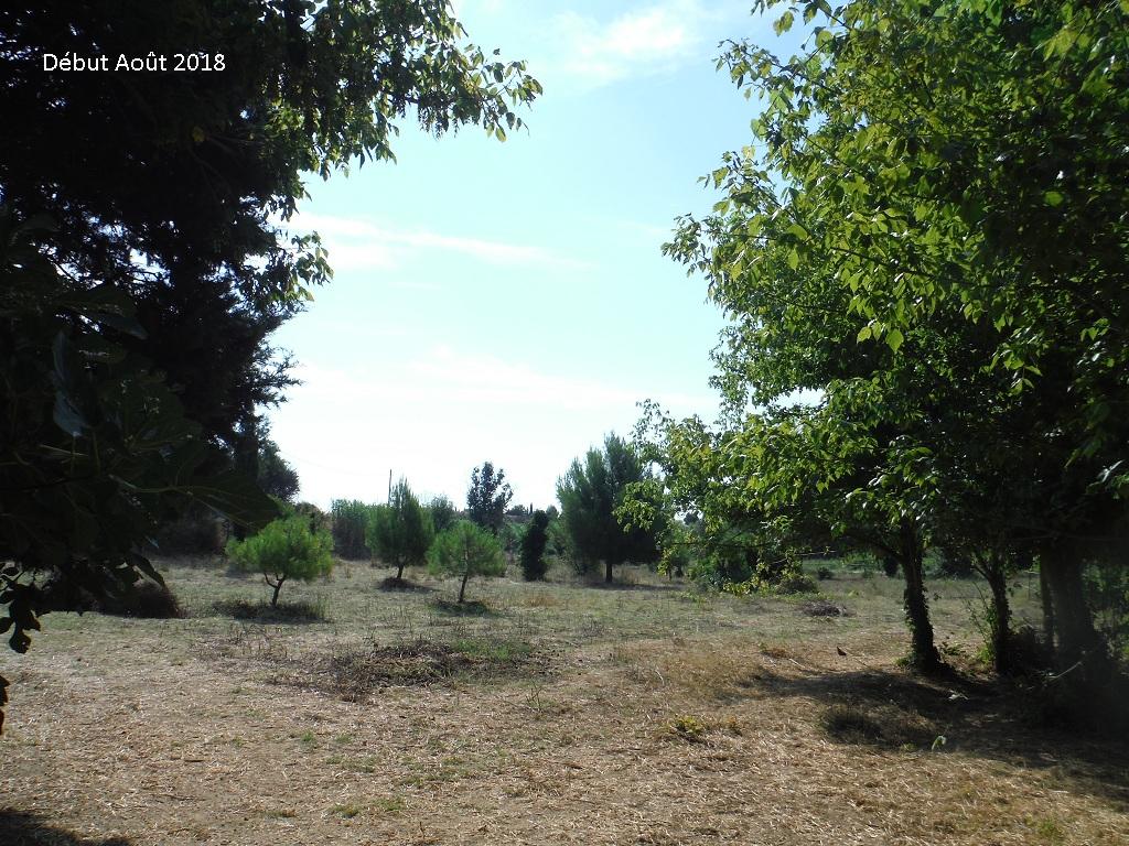 JdB de 4 hectares de pâtures dans le SUD : Avril 2019, et toujours la sécheresse... - Page 9 14026p10