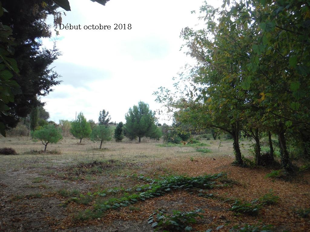 JdB de 4 hectares de pâtures dans le SUD : Avril 2019, et toujours la sécheresse... - Page 9 14027p10