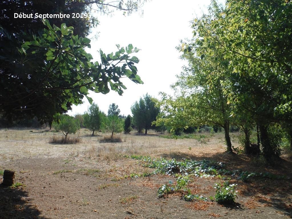 JdB de 4 hectares de pâtures dans le SUD : Timide reprise après 8 mois de sécheresse - Page 13 14038p10