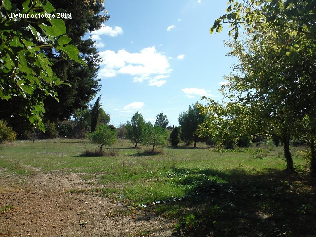 JdB de 4 hectares de pâtures dans le SUD : Timide reprise après 8 mois de sécheresse - Page 13 14039p10