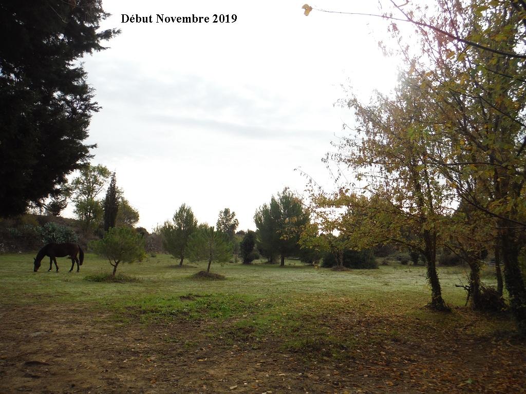 JdB de 4 hectares de pâtures dans le SUD : Janvier à la diète... + expérimentation - Page 13 14040p10