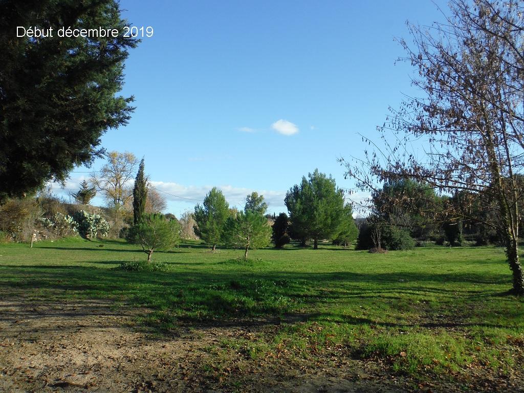 JdB de 4 hectares de pâtures dans le SUD : Janvier à la diète... + expérimentation - Page 13 14041p10
