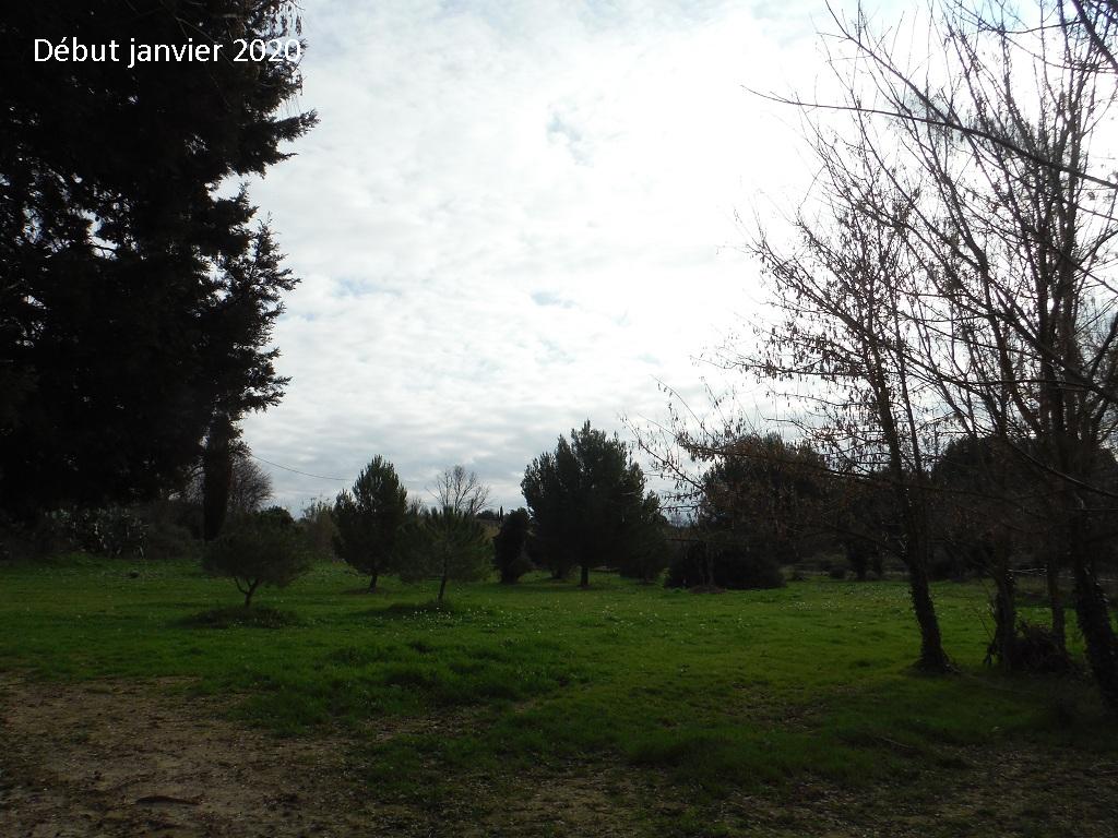 JdB de 4 hectares de pâtures dans le SUD : Janvier à la diète... + expérimentation - Page 13 14042p10
