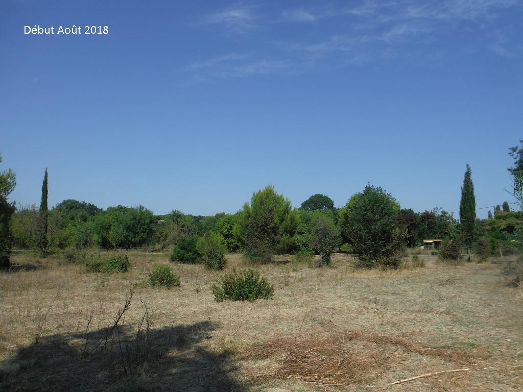 JdB de 4 hectares de pâtures dans le SUD : Avril 2019, et toujours la sécheresse... - Page 9 15026p10