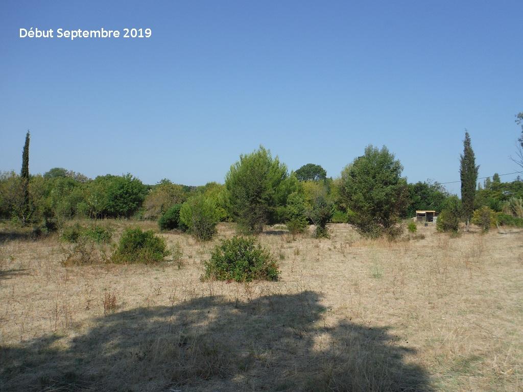 JdB de 4 hectares de pâtures dans le SUD : Timide reprise après 8 mois de sécheresse - Page 13 15038p10