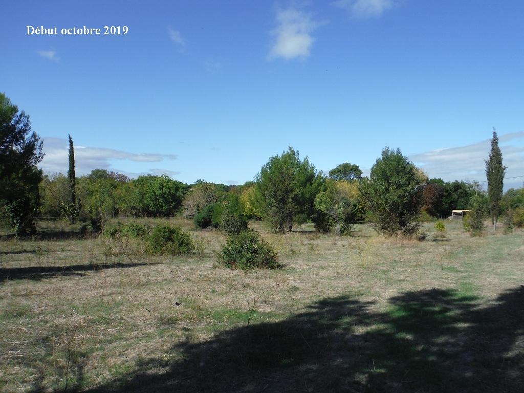 JdB de 4 hectares de pâtures dans le SUD : Timide reprise après 8 mois de sécheresse - Page 13 15039p10