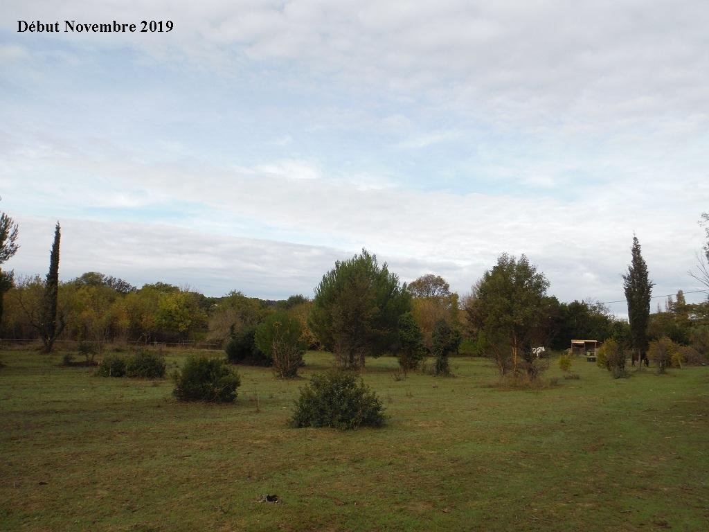 JdB de 4 hectares de pâtures dans le SUD : Janvier à la diète... + expérimentation - Page 13 15040p10
