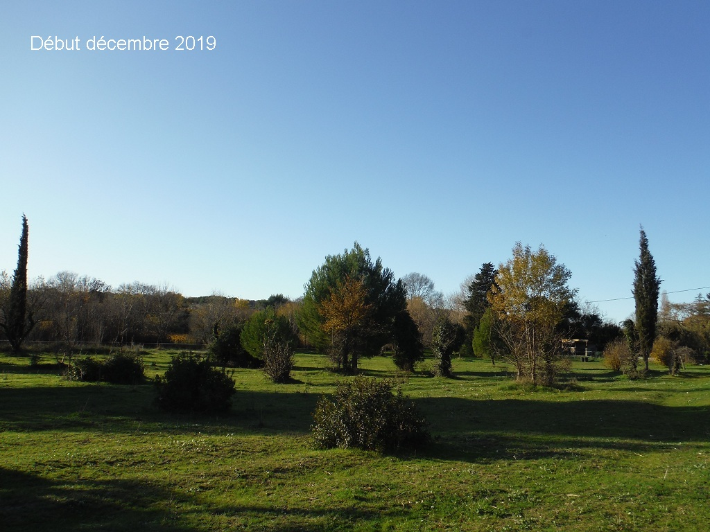 JdB de 4 hectares de pâtures dans le SUD : Janvier à la diète... + expérimentation - Page 13 15041p10