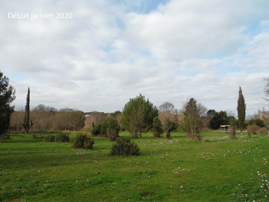 JdB de 4 hectares de pâtures dans le SUD : Janvier à la diète... + expérimentation - Page 13 15042p10