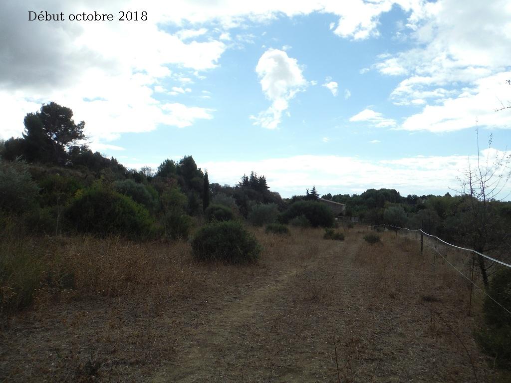JdB de 4 hectares de pâtures dans le SUD : Avril 2019, et toujours la sécheresse... - Page 9 2027pa10