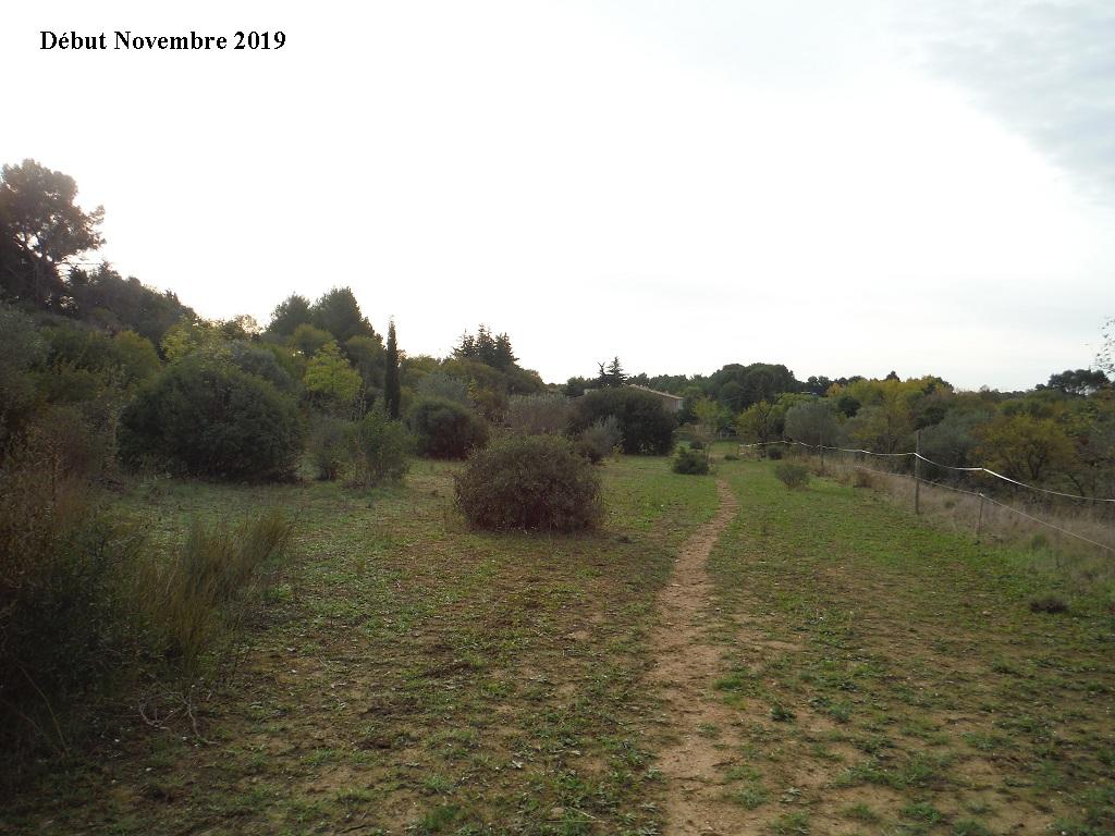 JdB de 4 hectares de pâtures dans le SUD : Janvier à la diète... + expérimentation - Page 13 2040pa10