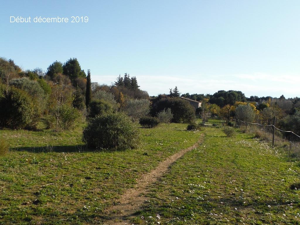 JdB de 4 hectares de pâtures dans le SUD : Janvier à la diète... + expérimentation - Page 13 2041pa10