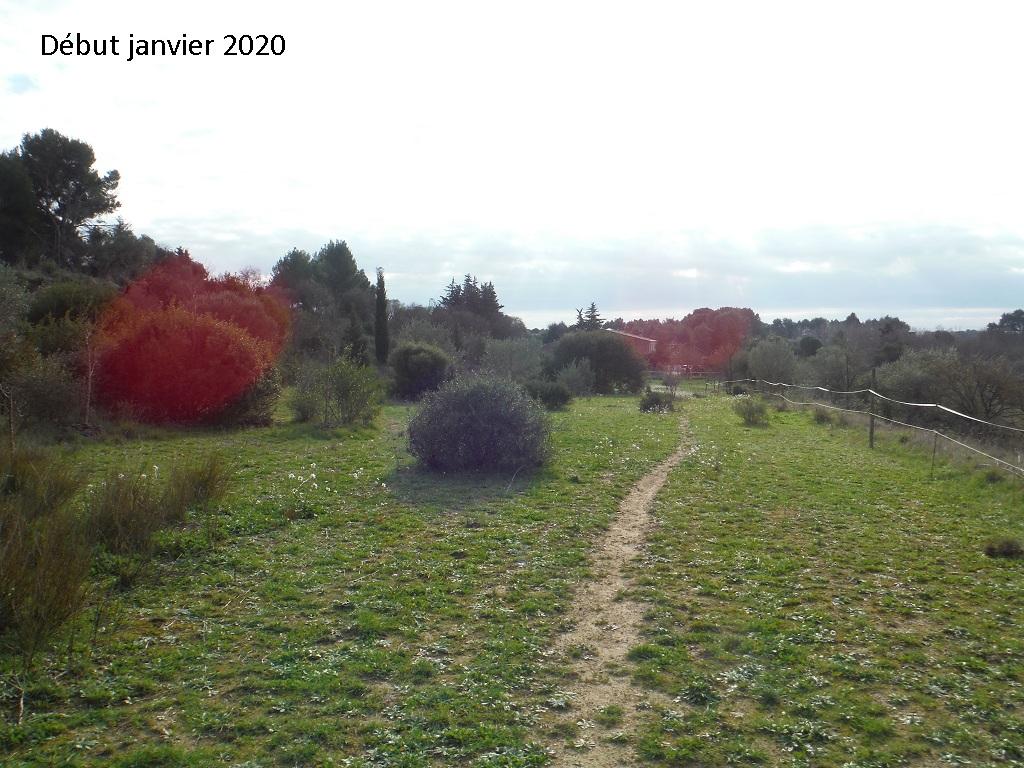 JdB de 4 hectares de pâtures dans le SUD : Janvier à la diète... + expérimentation - Page 13 2042pa10