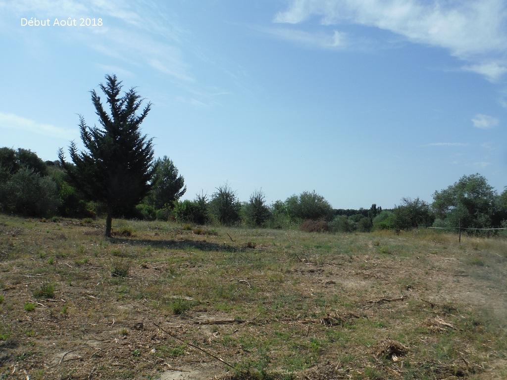 JdB de 4 hectares de pâtures dans le SUD : Avril 2019, et toujours la sécheresse... - Page 9 3026pa10
