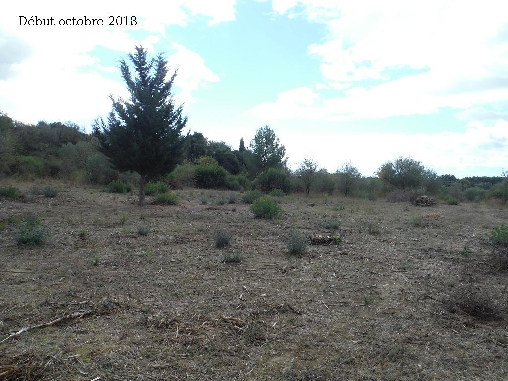 JdB de 4 hectares de pâtures dans le SUD : Avril 2019, et toujours la sécheresse... - Page 9 3027pa10